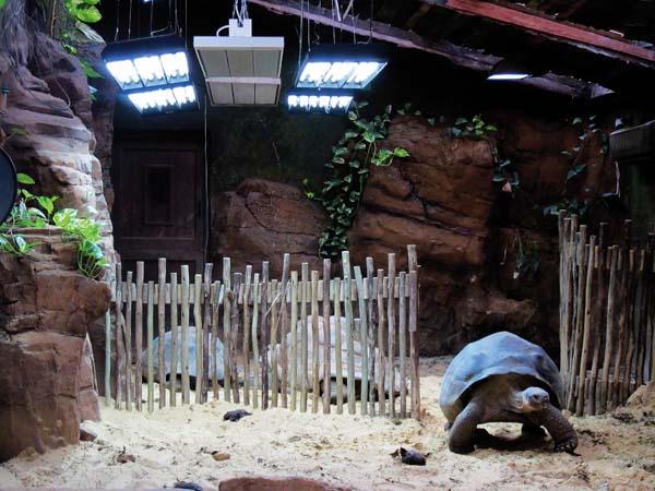 ndoor accommodations for Galapagos tortoises at ZSL London Zoo.