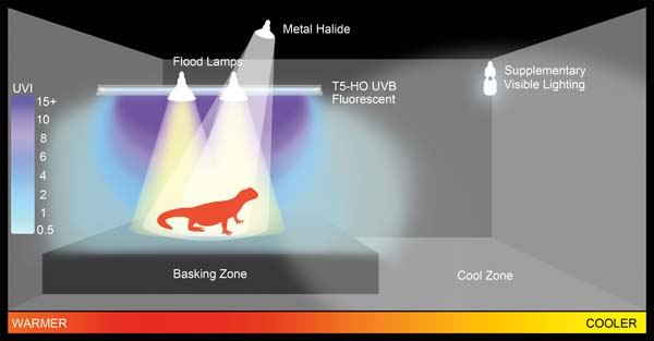 Fig. 8. Diagram of a basking zone created for a reptile in Ferguson Zone 3 or 4, using a combination of a T5-HO UVB fluorescent tube for UVB, with incandescent basking lamps and a non-UVB metal halide lamp for visible light and heat.