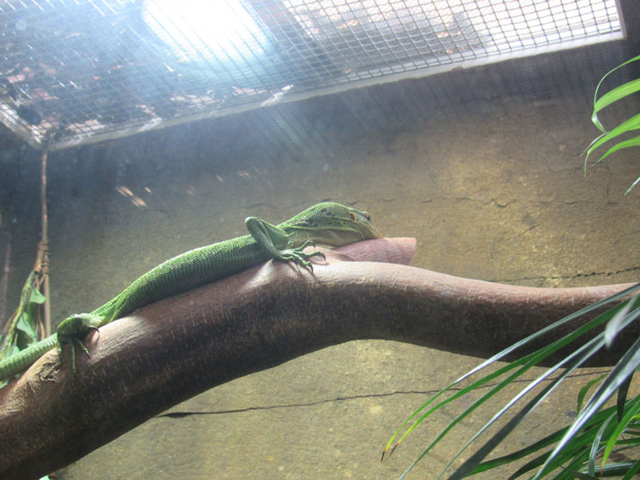 Green tree monitor under a heat lamp
