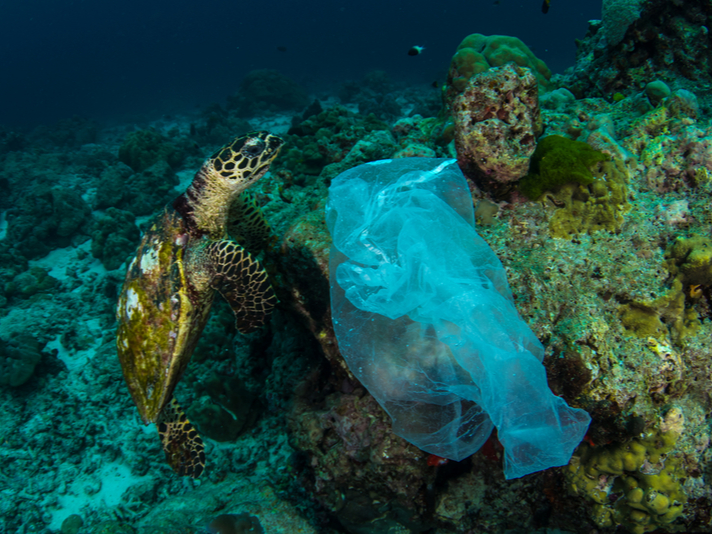 sea turtle and plastic