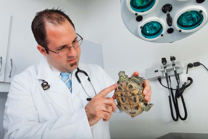 Have your turtle examined by a vet at the first sign of illness.