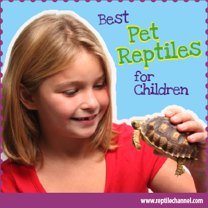 Best pet reptiles for children