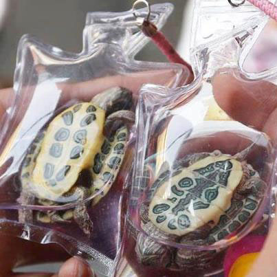 Live turtles sealed in bags
